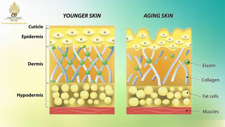 collagen la gi